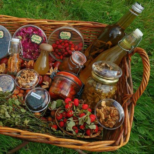 Oogsten-uit-de-natuur-leven-met-de-natuur-zelfvoorziendend-leven-eten-uit-de-natuur-paddenstoelen-plukken
