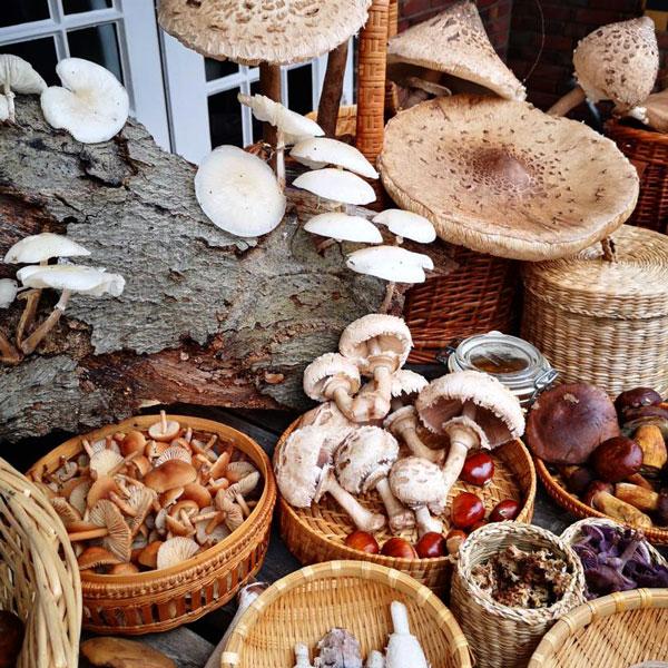 eetbare-wilde-paddenstoelen-workshop-cursus-bedrijfsuitje-restaurant-de-Swarte-Ruijter-Cas-Spijkers-academie